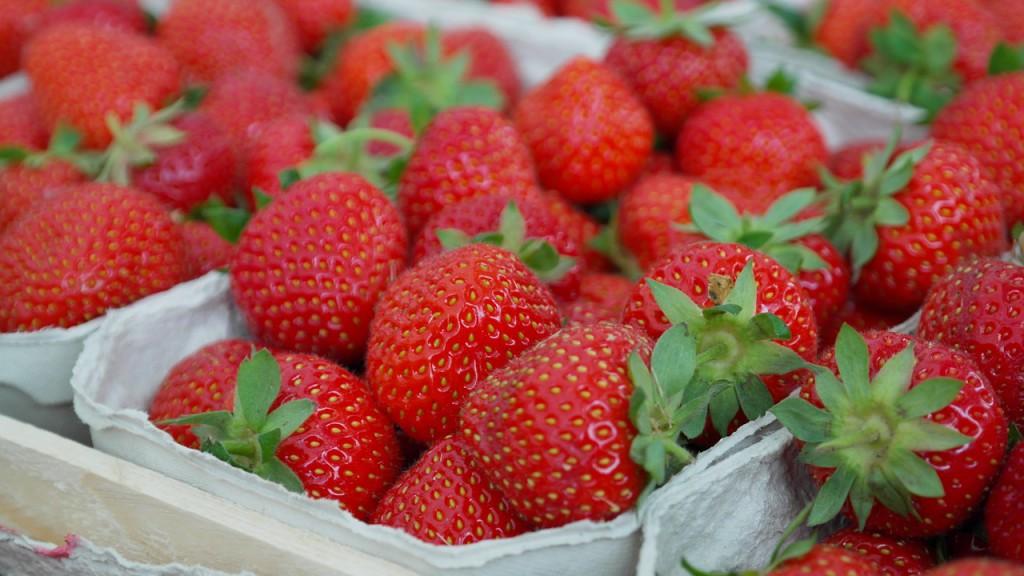 Erdbeersaison 2016